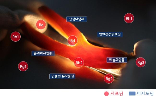 red-ginseng_07